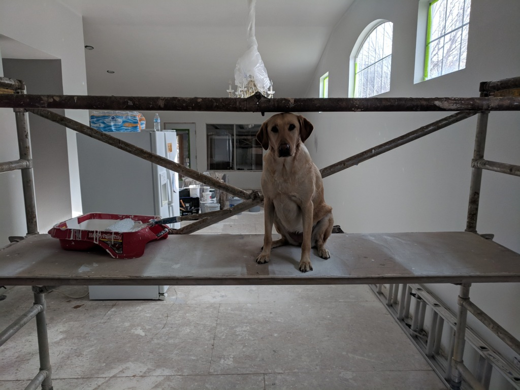 Dog on a scaffold with paint
